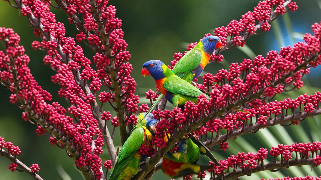 Rainbow Lorikeets Umbrella Tree