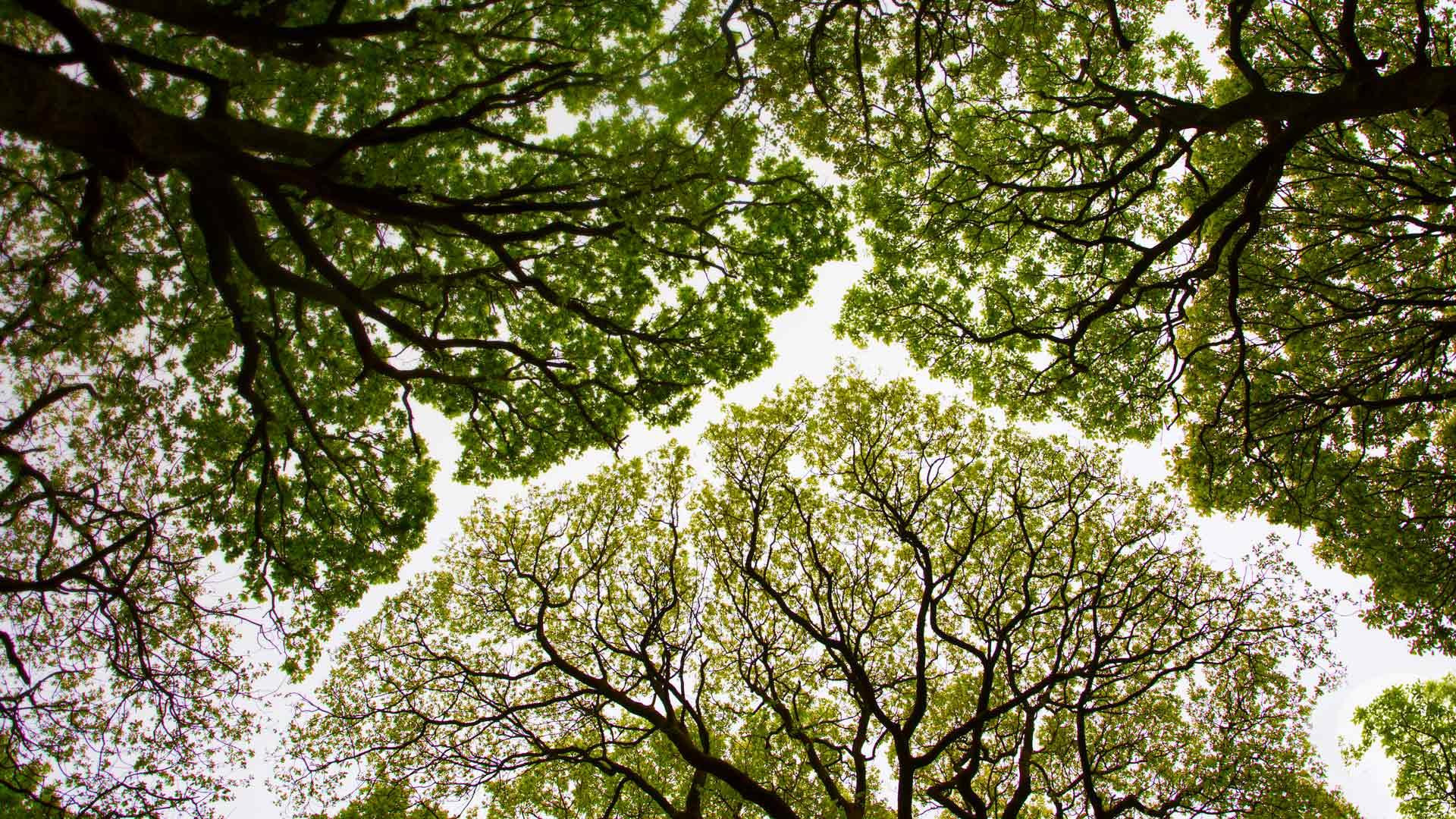 Roudsea Wood