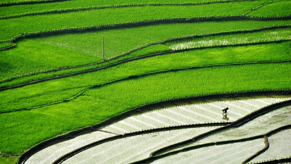 Sichuan Terracefield