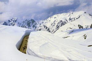 Snow Otani