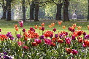 Tulpen Baden Baden
