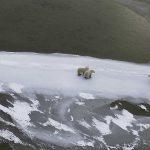 Hudson Bay Polars