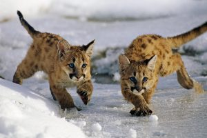 ML Cubs