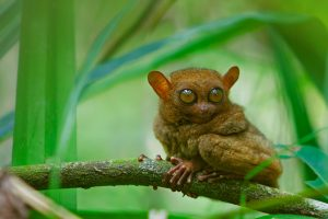 Tarsier Video