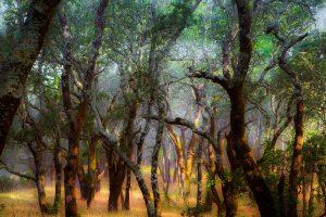 Arbor Day Oaks
