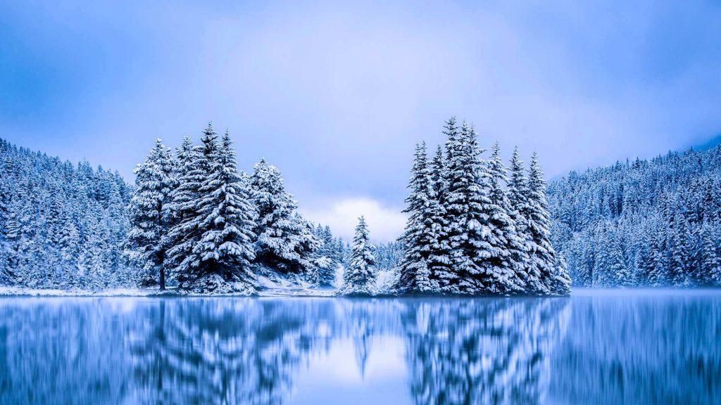 Banff Evergreens