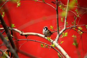 Birds Springtime