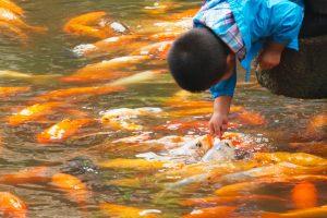 Boy Petting Fish