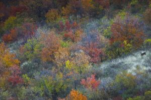Deer Autumn France