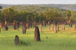 Litchfield Mounds