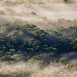 Megalong Fog