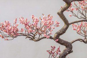 Plum In Spring