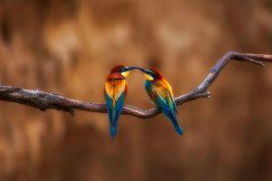 Two Birds Perching