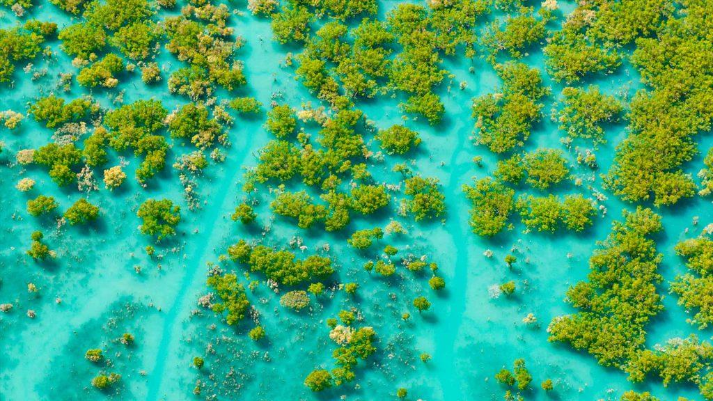 Mangroves King Sound