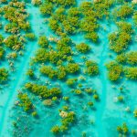 Mangroves King Sound
