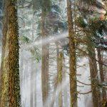 Mt Baker Trees