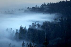 RNP Fog Video
