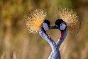 Heart Cranes