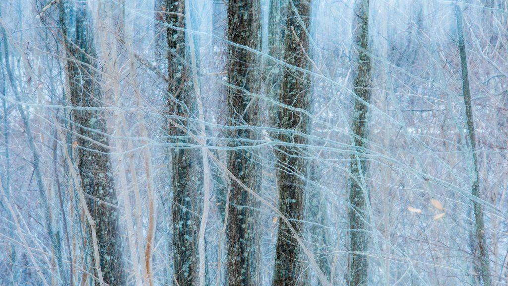 Nova Scotia Oak