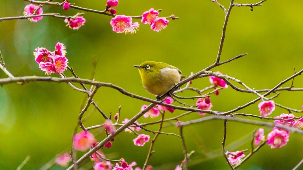 Risshun Birds2