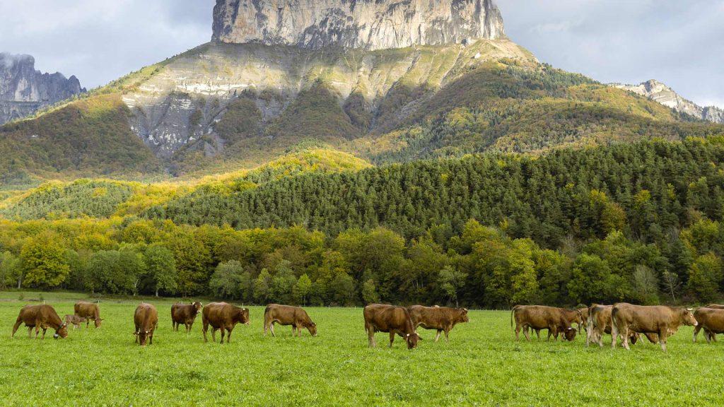 Vercors Parc Cows