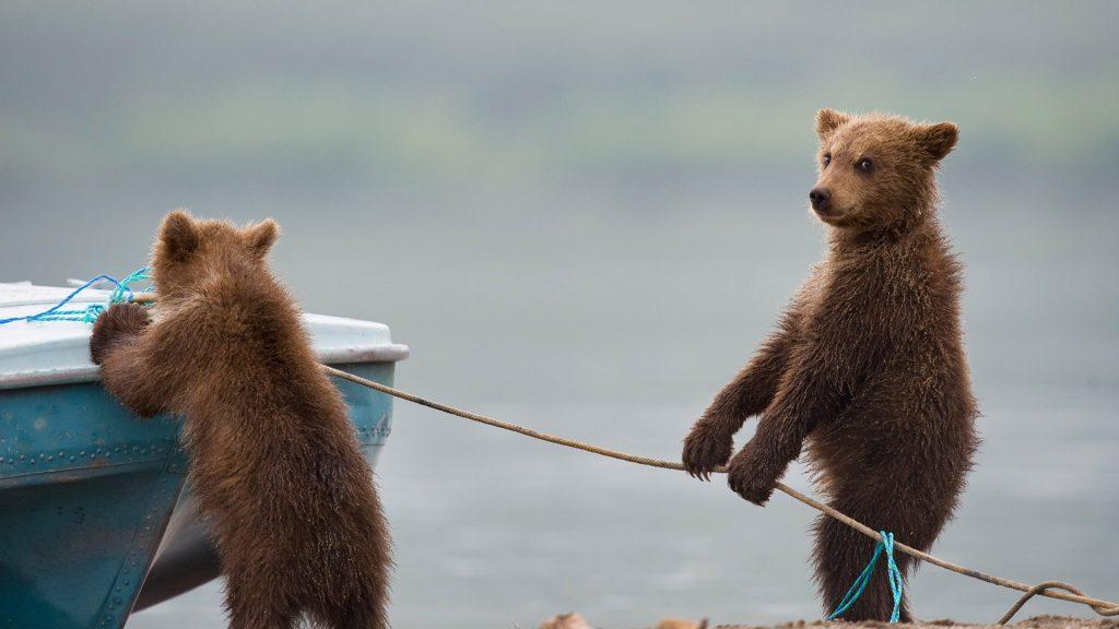 Mischief Cubs