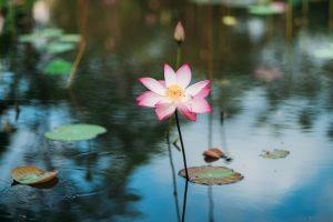 Flower Fes_
