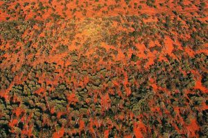 Outback Aerial