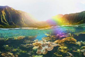 Tropical Uder Reef