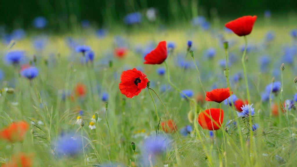 Blumenwiese NRW