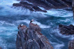 Cape Sardao Storks