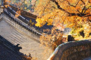 China Autumn Scene