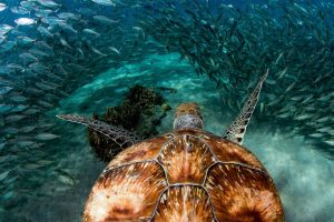 Curacao Turtle