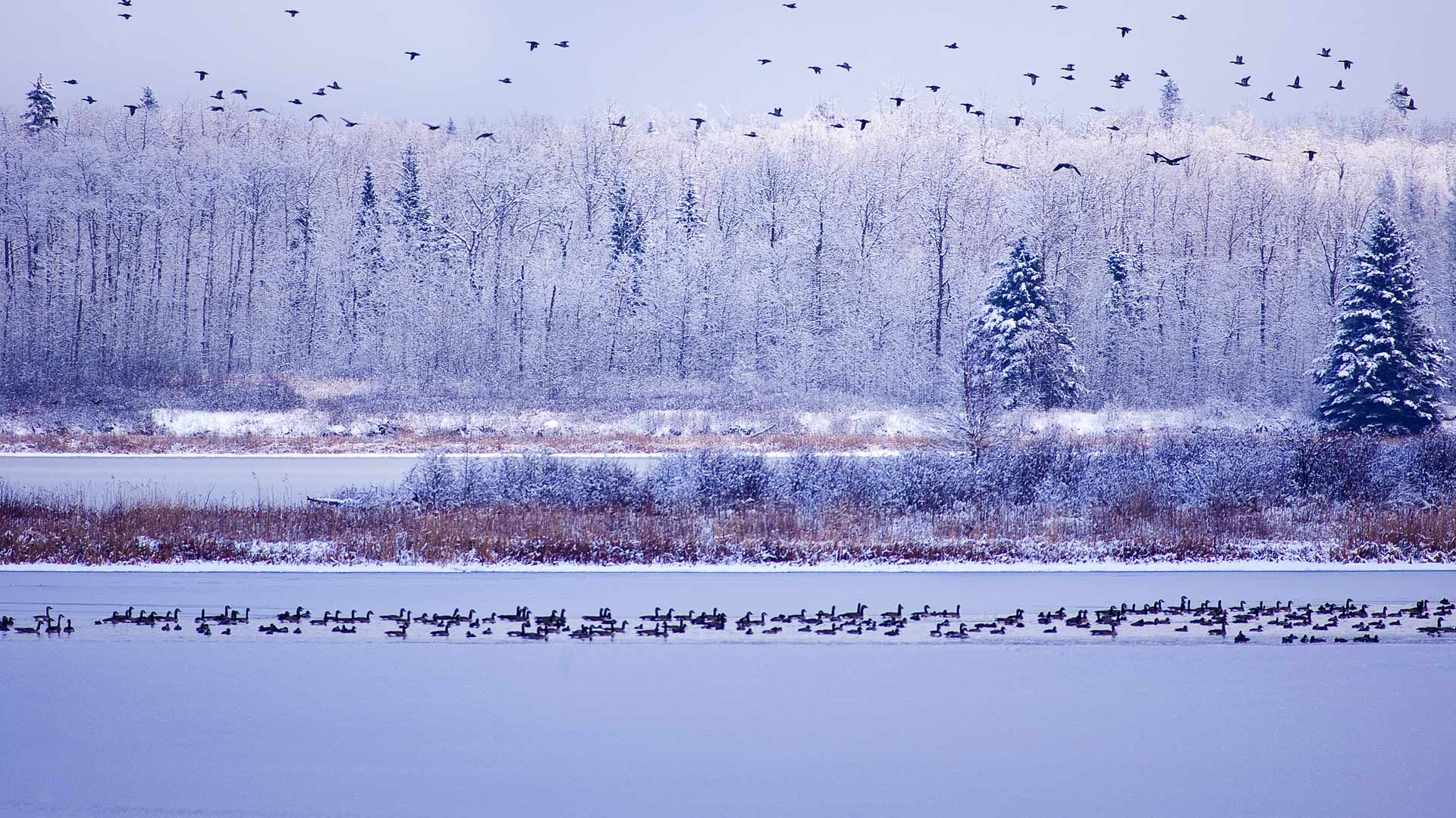 Elk Island NP