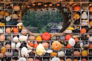 Thailand Pumpkins