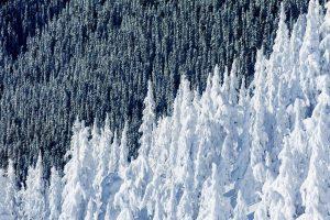 Whistler Trees