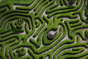 Cherry Laurel Maze