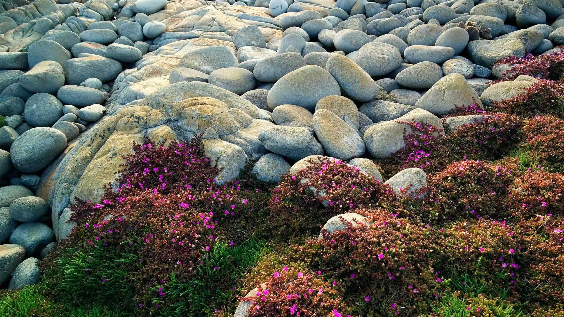 Egg Beach