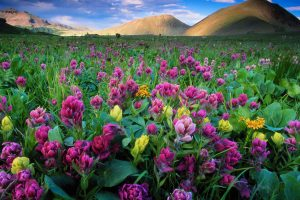 Flowers Colorado