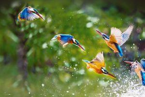 Kingfishers Taipei