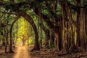 Ranthambore Trees