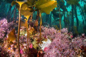 Underwater BC