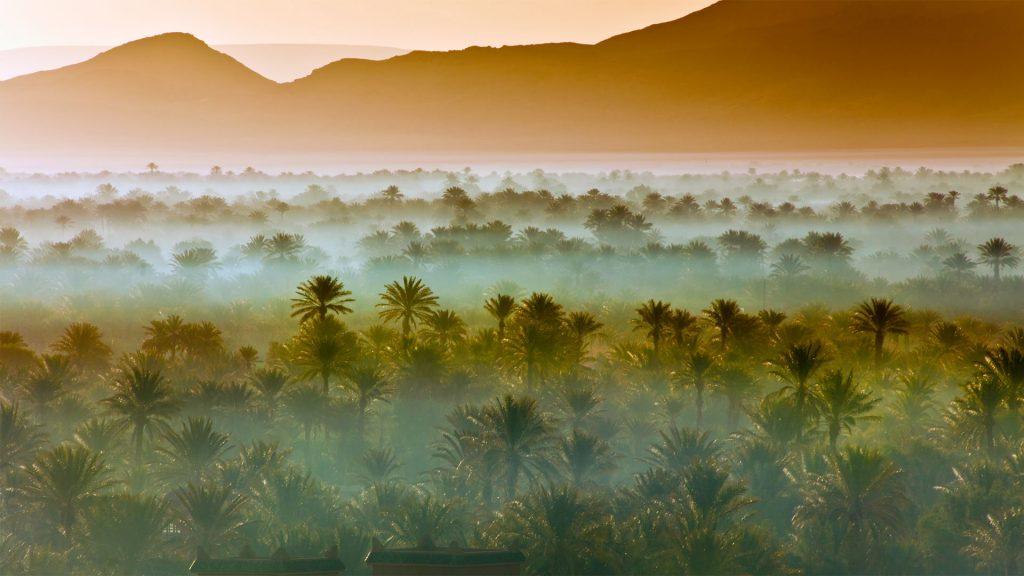 Vast Palm Grove