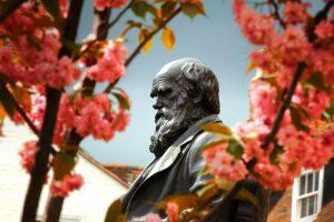 Darwin Shrewsbury
