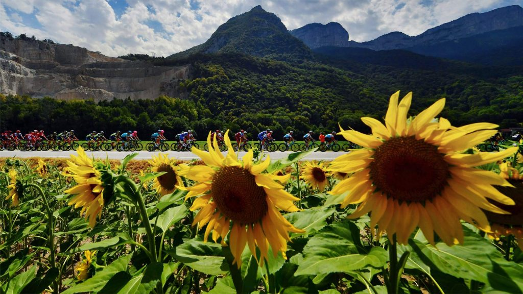Peloton Sunflowers