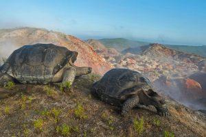 Tortoise Migration