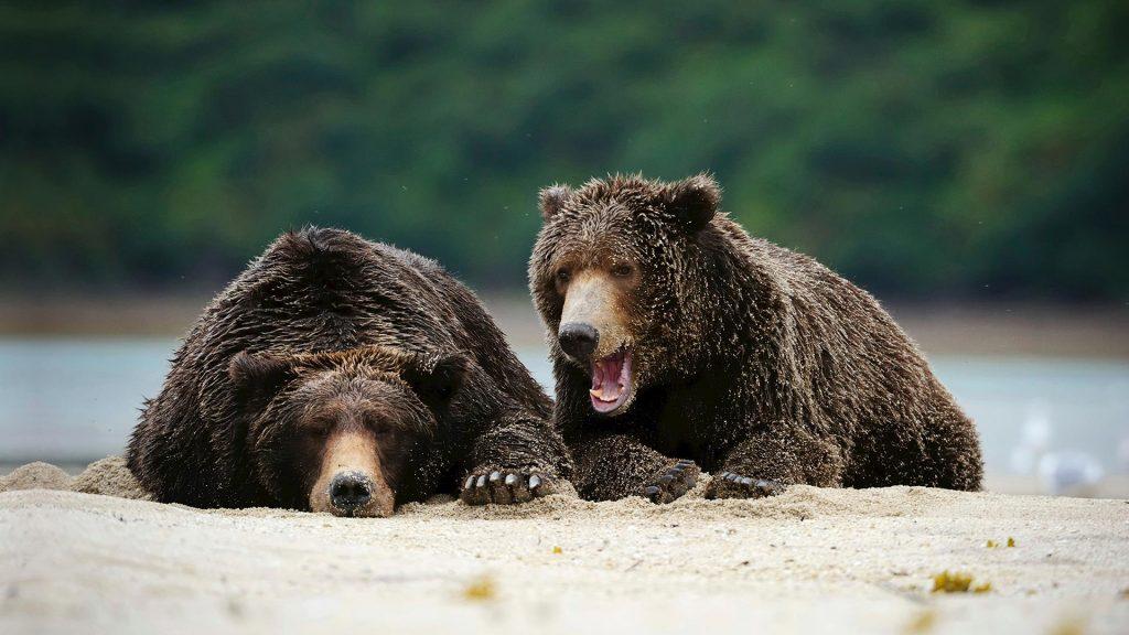 August Bears