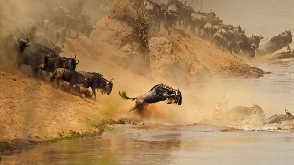 Mara River Crossing