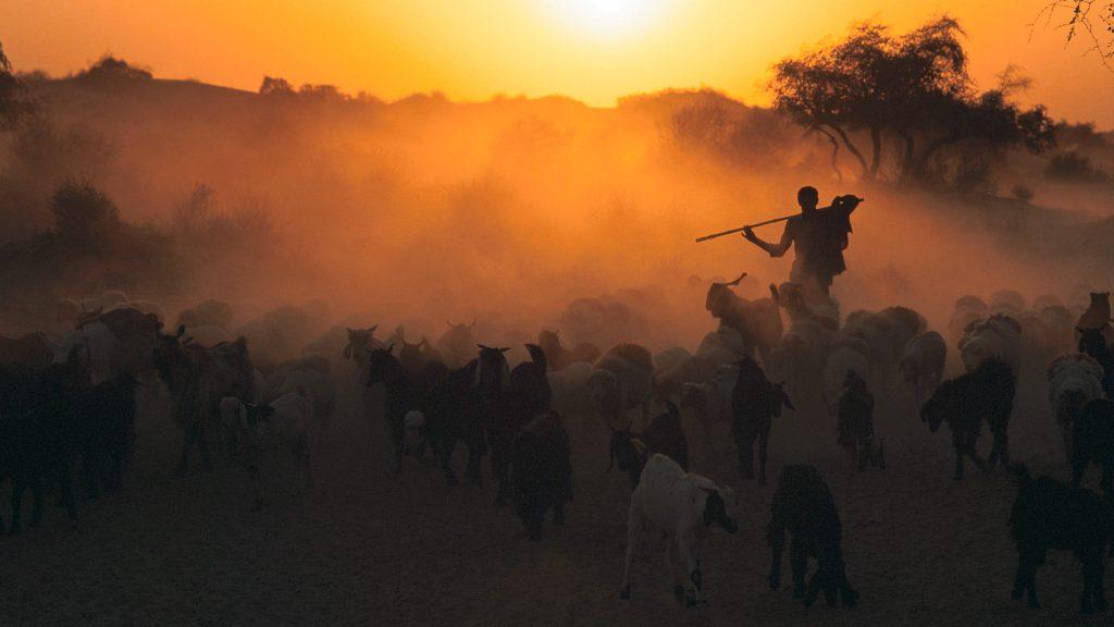 Thar Goats
