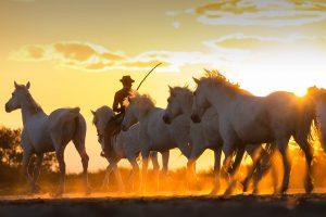 Cowboy Horses